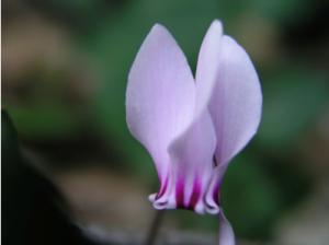 630 - Flora and fauna