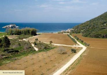 Chilandariou_vine_and_olive_yard