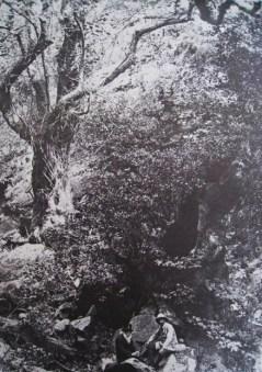 Millet_1917