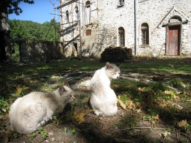 IMG_3196 Palio Monastiro cats.JPG