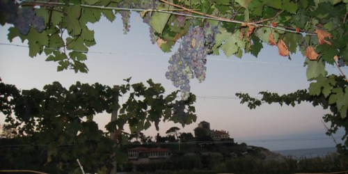 Img_3285_mylopotamos_with_grapes