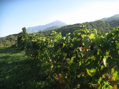 Img_3253_mylopotamos_wines_and_moun
