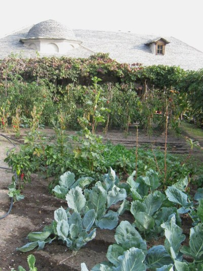 Img_3372_ag_georgiou_cabbage_and__2
