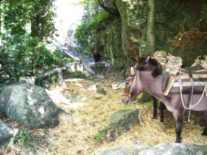 IMG_3460 mules