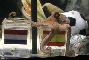 Octopus wk