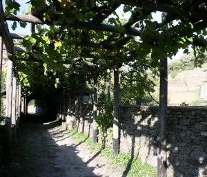 Old road behind Iviron