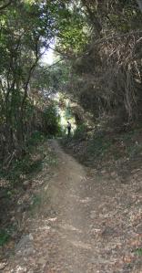 Path Iviron Stavronikita