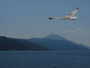 Seagull and mountain