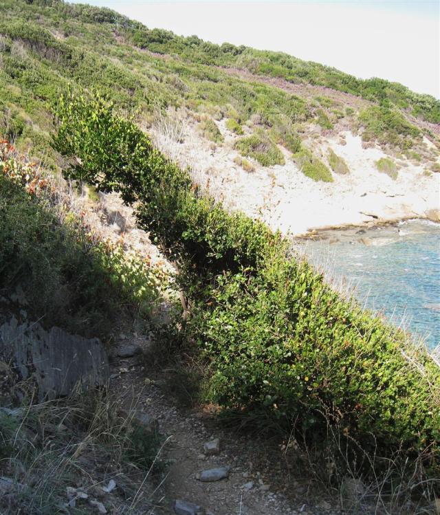 img_3647-path-to-kaliagra-bushes-large
