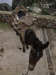 Taxi mule athos