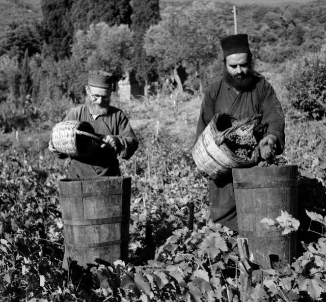 Kutlumusiou grape harvest 1950
