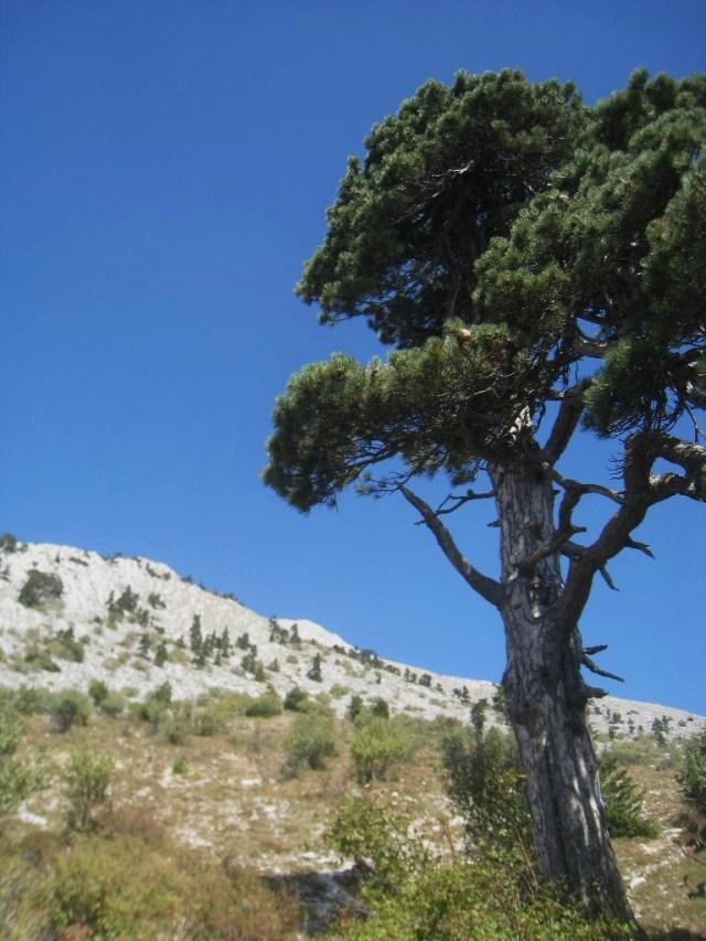 05-10 23 path near Panaghia