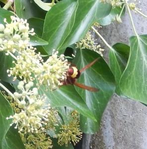a bug 1