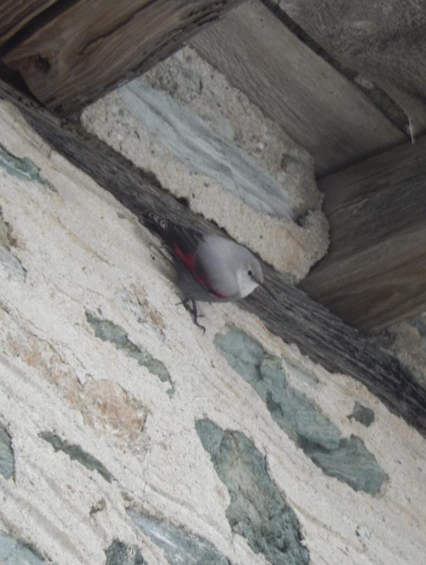 bird at dion