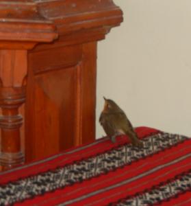 bird at greg
