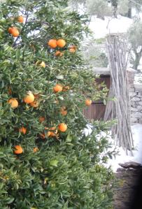 orange 3 nea