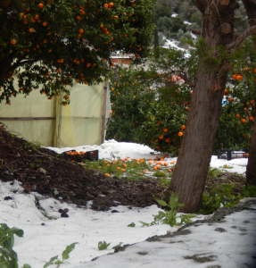orange 4  nea