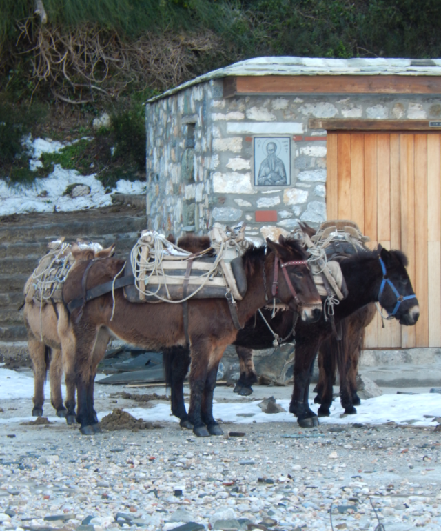 mule for transport