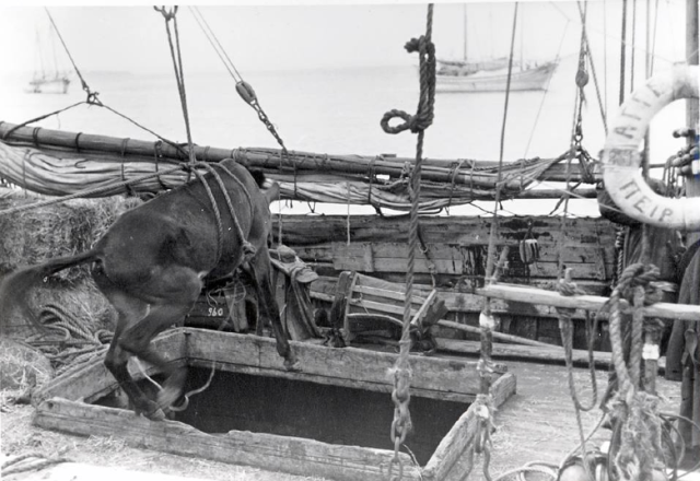mule transport 2