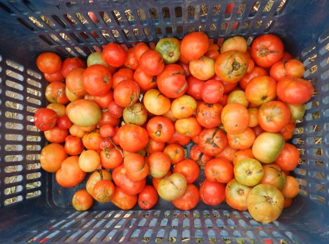 red tomatoes kitchen esfigmenou