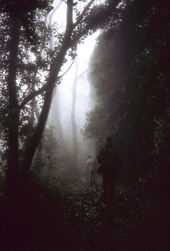 woods-sketi-andreou